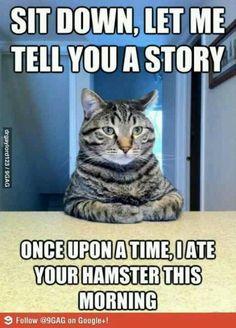Hahahahahahahahaha I love funny cats