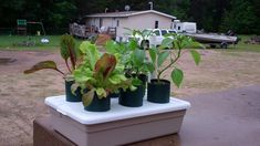 The Self Watering Pop Bottle Garden  Continues To Amaze Me! You Got To B...