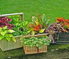 Click pic for 35 Container Gardeing Ideas - Upcycled Cases | DIY Spring Garden Projects