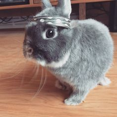 Otto king of the #bunnies . One day I'll steal a #rabbit @tomp_wright  one day... by stumblyjones