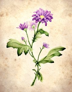 Botanical Illustrations by Sarah O'Connell, via Behance