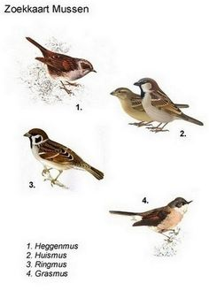 Lehrerin Rita pcbs 't Mosaic :: Lehrerin Rita pcbs' t Mosaic Exotic Birds, Colorful Birds, Pretty Birds, Beautiful Birds, Nature Animals, Animals And Pets, Bird Breeds, Birds In The Sky, Backyard Birds