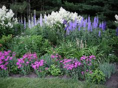 This is a very large Delphinium elatum border. In the front are Silene armeria (annual) blooming, and Anemone Pamina for fall blooms. In the back are Persicaria polymorpha and Miscanthus giganteus.