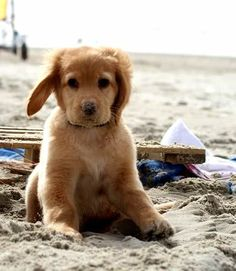 An adorable puppy sitting in the sand