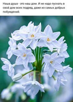 Цветы, Растения, Картинки