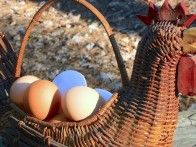 Tips for increasing egg production when it is cold outside.