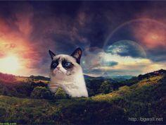 Warrior Cats Wallpapers Desktop Wallpaper