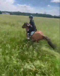 Cute Horses, Beautiful Horses, Animals And Pets, Cute Animals, Horse Videos, Horse Riding, Mind Blown, Art Sketches, Equestrian