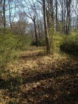 17.35 acres on Little Tallapoosa River - Property - LandAndFarm.com - Land for Sale $55000