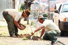 Cidade paulista lança 'disque-árvore' para plantar ipês e outras mudas