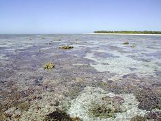 Reef off Heron Island, Capricornica Cays National Park Queensland Australia By ivanperez