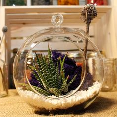 Cold weather bringing you down? Bring nature indoors by making your own terrarium with our expert DIY!