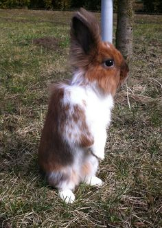Bunny Stands up Tall - June 21, 2011