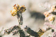 Lyndsey Garber Photography || Buckskin Bride Blog #ranchengagementsession #newmexico #newmexicophotography #horseengagementsession #cowboywedding #westernwedding #cowboyengagementphotos #westernenagagmenetsession #newmexicoranch #floraldress #floralmaxi #cowboyhat #horsephotos