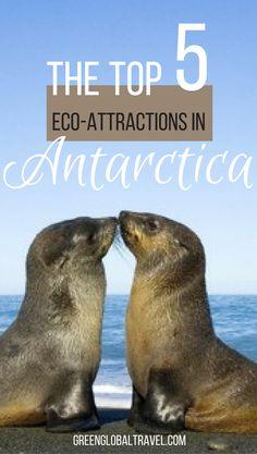 Read about our top five Antarctica Ecotourism Attractions | Drake Passage | Shetlands Islands | Whales | Lemaire Channel |