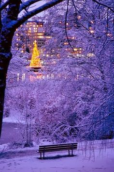 Christmas in Stanley Park, Vancouver, British Columbia, Canada