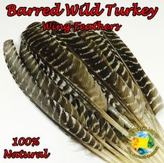 Natural Barred Wild Turkey Wing Feather - Pack of 5