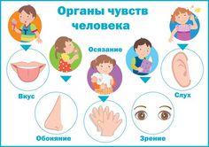 Играем до школы: Изучаем органы чувств человека. Наглядное пособие для детей