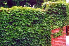 1000 Images About Hide That Wall On Pinterest Cinder