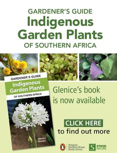 South Africa is home to a magnificent variety of indigenous trees and shrubs, and with a move by home owners towards the use of indigenous plants, it has become ever more important to choose species that will work in your home. Whilst many indigenous species are now being planted in gardens around Gauteng, not all