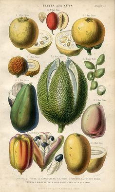 Fruits and Nuts, 1866