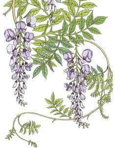 Grasset's Art Nouveau Floral Ornament CD-ROM and Book Dover Publications