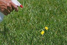 Recipe for Vinegar Weed Killer - Diy weed killer - Uses For White Vinegar, Vinegar Uses, Vinegar Salt, Cider Vinegar, Recipe For Vinegar, Kill Weeds With Vinegar, Weeds Vinegar, How To Kill Grass, Killing Weeds