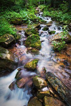 Bruce Trail Provincial Park, near Collingwood, Ontario