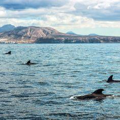 Whales Catamaran Tour