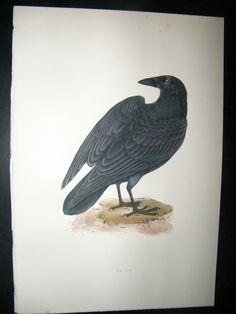 Morris 1891 Antique Bird Print Raven