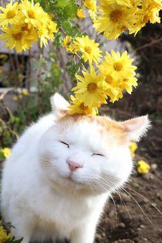 黃菊 - かご猫 Blog