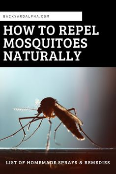 How To Repel Mosquitoes Naturally With Homemade Sprays  DIY Natural Homemade Best Sprays   #mosquitorepellent  #diy  #homemade  #Best  #sprays  #natural Vicks Vapor Rub, Keeping Mosquitos Away, Mosquito Protection, Growing Mint, Natural Mosquito Repellant, Mosquito Killer, Water Gardens, Mosquitoes, Ponds