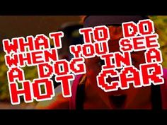 5 Things to Do if You See a Dog in a Hot Car | Actions | PETA