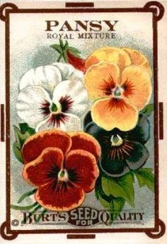 pansy seed packet  In honor of my mother, this was her favorite flower.