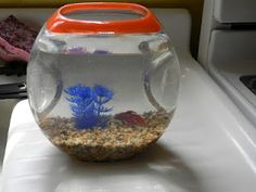 Turning Tide Pods Container into a fish bowl <---- I have a TON of these, great idea!