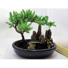 9GreenBox - BONSAI Juniper Tree Zen Garden With Pool Fishman,$15.99