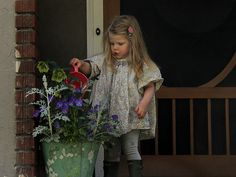 Flowers planted in the old bucket