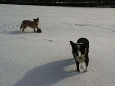 RIP Ashley. Our collie who had a very 'old' soul.