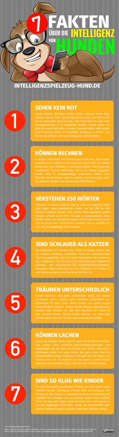 7 facts about the intelligence of dogs infographic- 7 Fakten zur Intelligenz von Hunden Infografik 7 facts about the intelligence of dogs infographic - All About Animals, Animals And Pets, Cute Animals, King Charles Dog, Cavalier King Charles, Irish Terrier, Dog Facts, Beagle Dog, Pet Life
