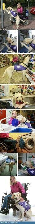 Service Animals. Much Respect.
