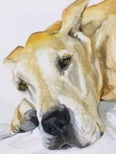 May Lowe - Beau painting- Watercolor - Painting entry - May 2017 Dog Sounds, Painting Competition, Online Painting, Lowes, Watercolor Paintings, Artist, Animals, Animales, Water Colors