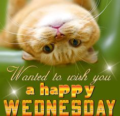 Good Morning Wednesday Images & Quotes, Inspirational Wednesday Quotes, Funny Wednesday Quotes for Work, Wednesday Sayings, HD Images for Whatsapp Status Wednesday Greetings, Wednesday Hump Day, Blessed Wednesday, Good Morning Wednesday, Wednesday Humor, Wacky Wednesday, Wonderful Wednesday, Good Morning Good Night, Morning Wish