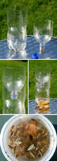 Make your own safe wasp trap without attracting and killing bees. first Cut the top off a plastic bottle to make a funnel. Then turn the funnel up-side-down so it fits inside the container. this will make it a easy to enter but not to leave. Then add a blend of vinegar, sugar and salt. Keep the trap out of the rain or it will quickly fill with rain water.