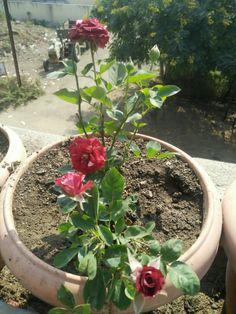 Instagram Status, Plants, Plant, Planets