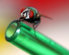 Beautiful picture of a fly in a bottle.