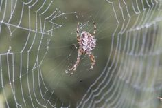 """Check out my art piece """"Spider"""" on crated.com"""