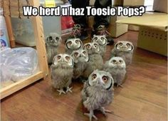Owl, how many licks does it take to get to the center of a tootsie pop? a a CHOMP How many licks does it take to get to the center of a tootsie pop? Funny Owls, Funny Cute, Funny Animals, Cute Animals, Funniest Animals, Animals Amazing, That's Hilarious, Humor Animal, Doug Funnie
