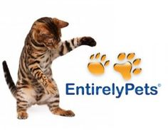 Giveaway: $100 Shopping Spree at Entirely Pets - The Conscious Cat