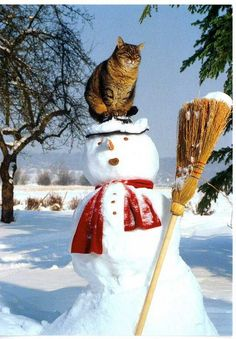 I think I just found my Christmas card! Kitty on top of a snowman. Adorable.