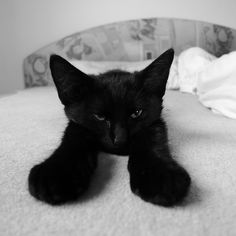 """""""The cat lives alone, has no real need for society, obeys only when she pleases, pretends to sleep that she may see clearer, and scratches everything on which she can lay her paw."""" -- Francois Chateaubriand"""